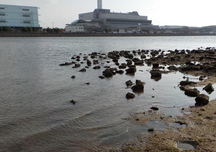 ハゼクランクで釣れそうな場所の画像