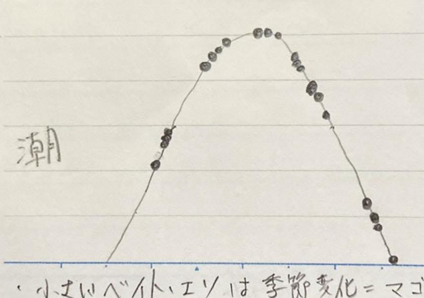 マゴチが釣れるタイミングの画像