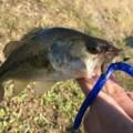 バス釣りワームおすすめ19選|釣れるワームはコレを見ればわかる!